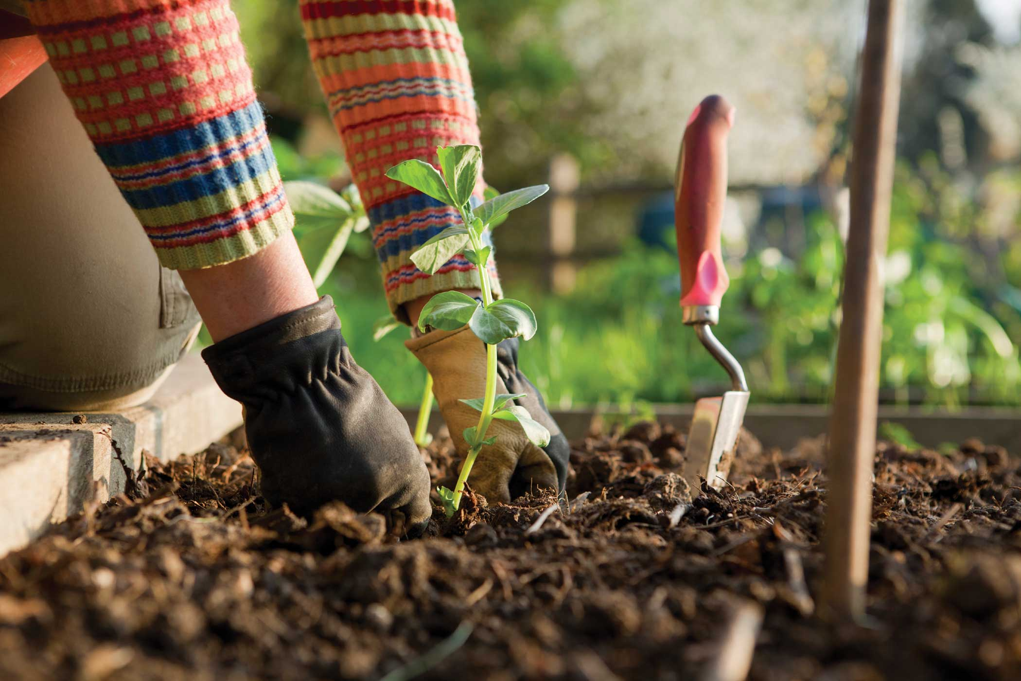 Interested in a Gardening Club online?